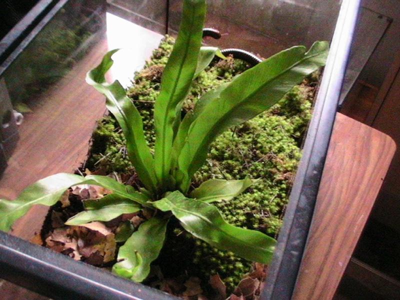 Plantes en terra? Photos26