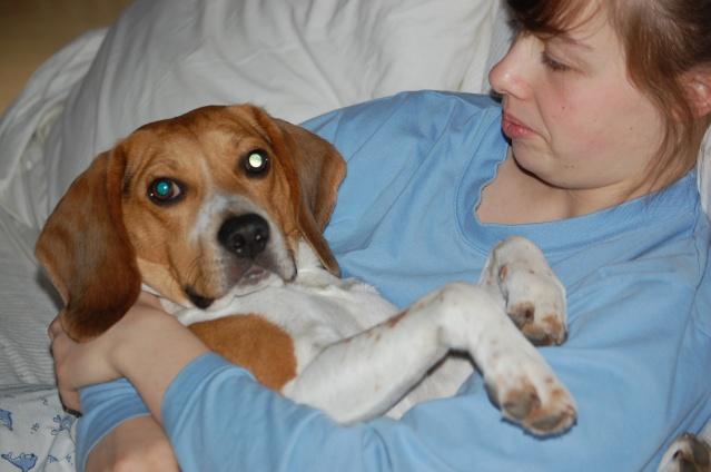 FILOU, beagle de 3 ans (59) en FA chez Fabou [Adopté] - Page 4 Dsc_1144