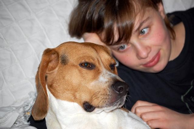 FILOU, beagle de 3 ans (59) en FA chez Fabou [Adopté] - Page 4 Dsc_1153
