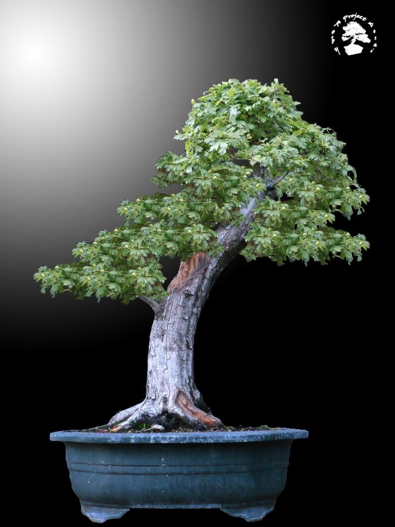 Un biancospino che diventa bonsai...... - Pagina 3 Bianco13