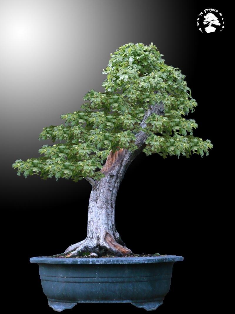 Un biancospino che diventa bonsai...... - Pagina 4 Bianco16