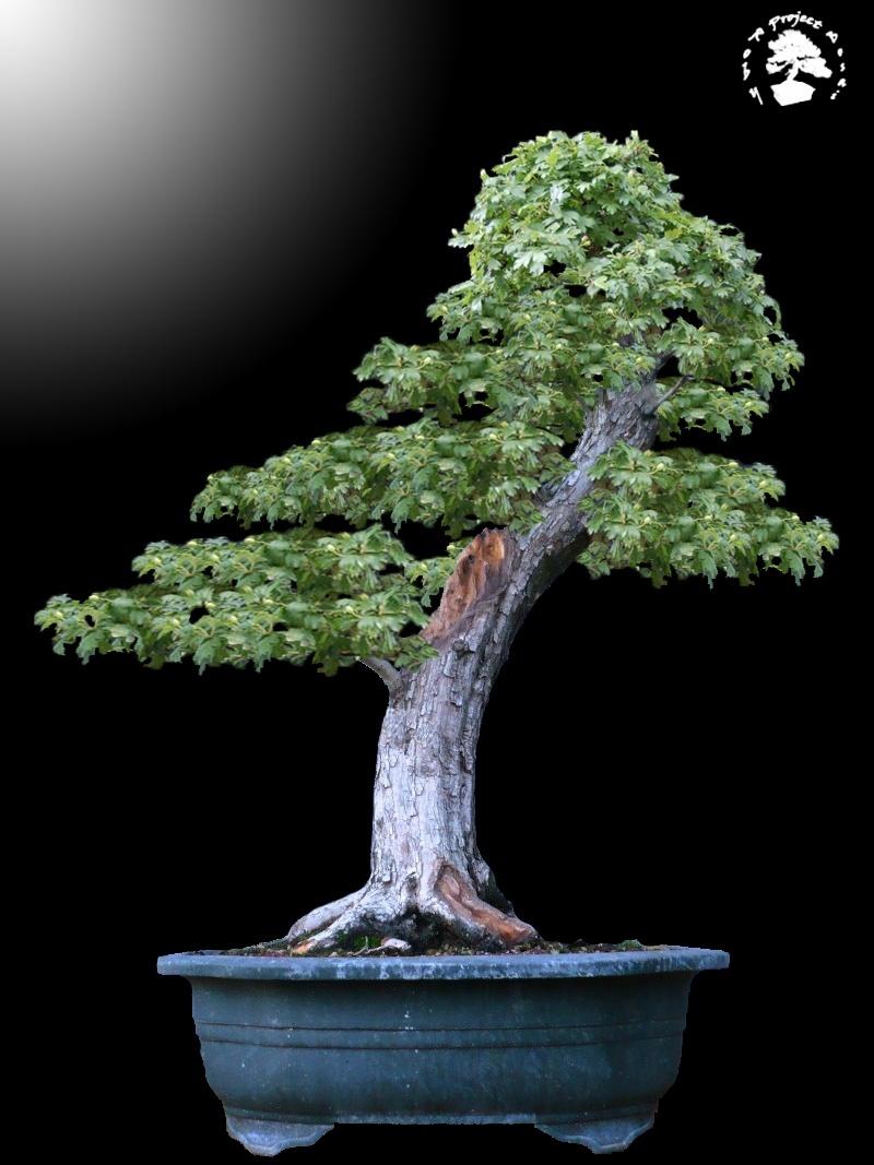 Un biancospino che diventa bonsai...... - Pagina 4 Bianco20