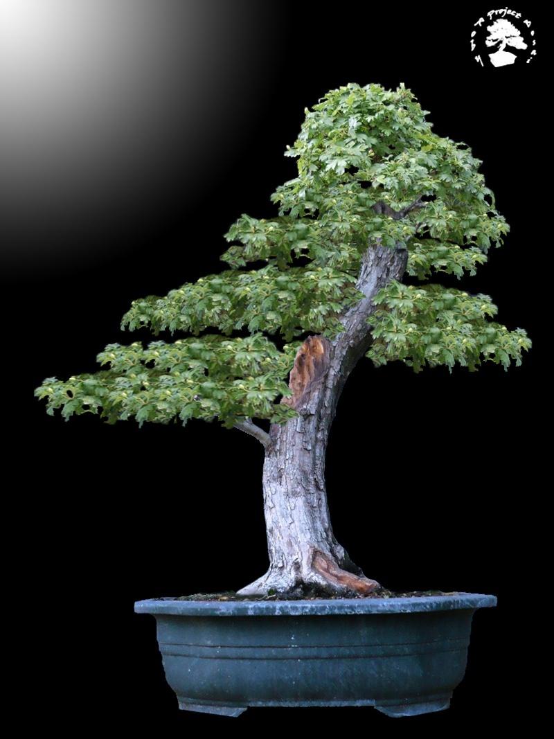 Un biancospino che diventa bonsai...... - Pagina 4 Bianco21