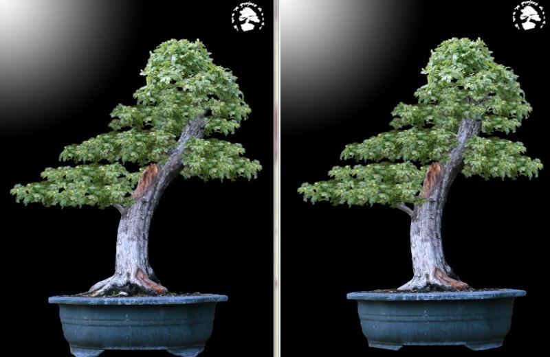 Un biancospino che diventa bonsai...... - Pagina 4 Cattur10