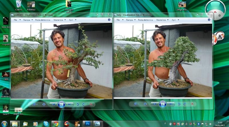 Un biancospino che diventa bonsai...... - Pagina 4 Cattur11
