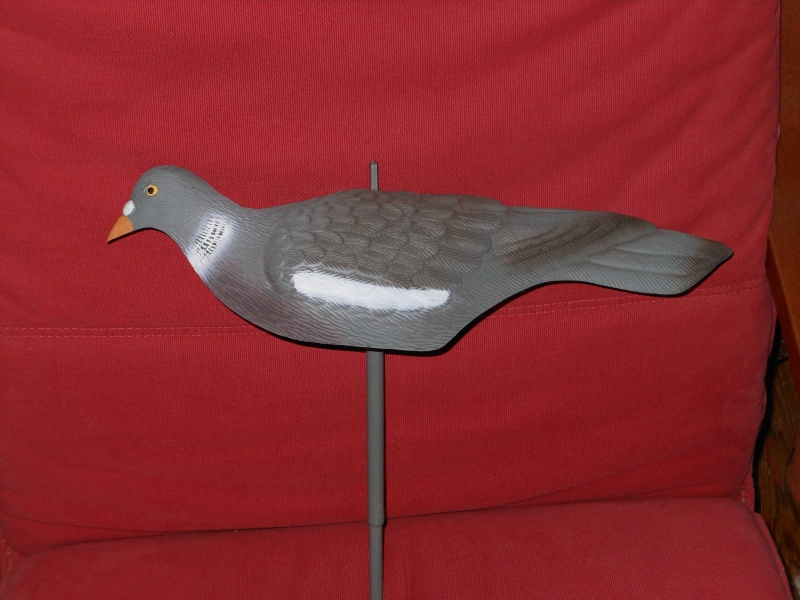 forme pigeon Dscn1411