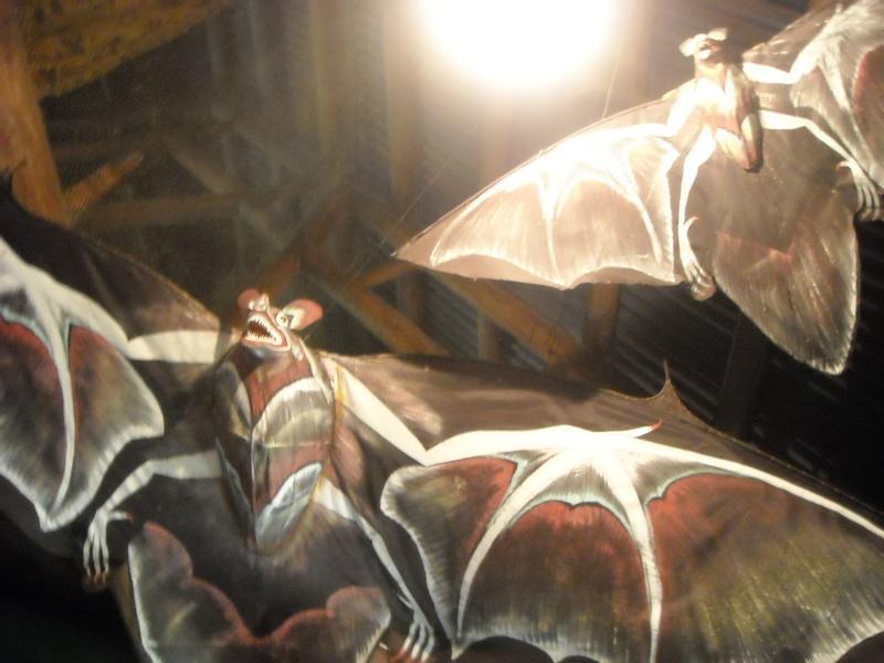 [WDW et Universal] THE voyage de noces, octobre 2010 (fini!) - Page 3 Dscn4225