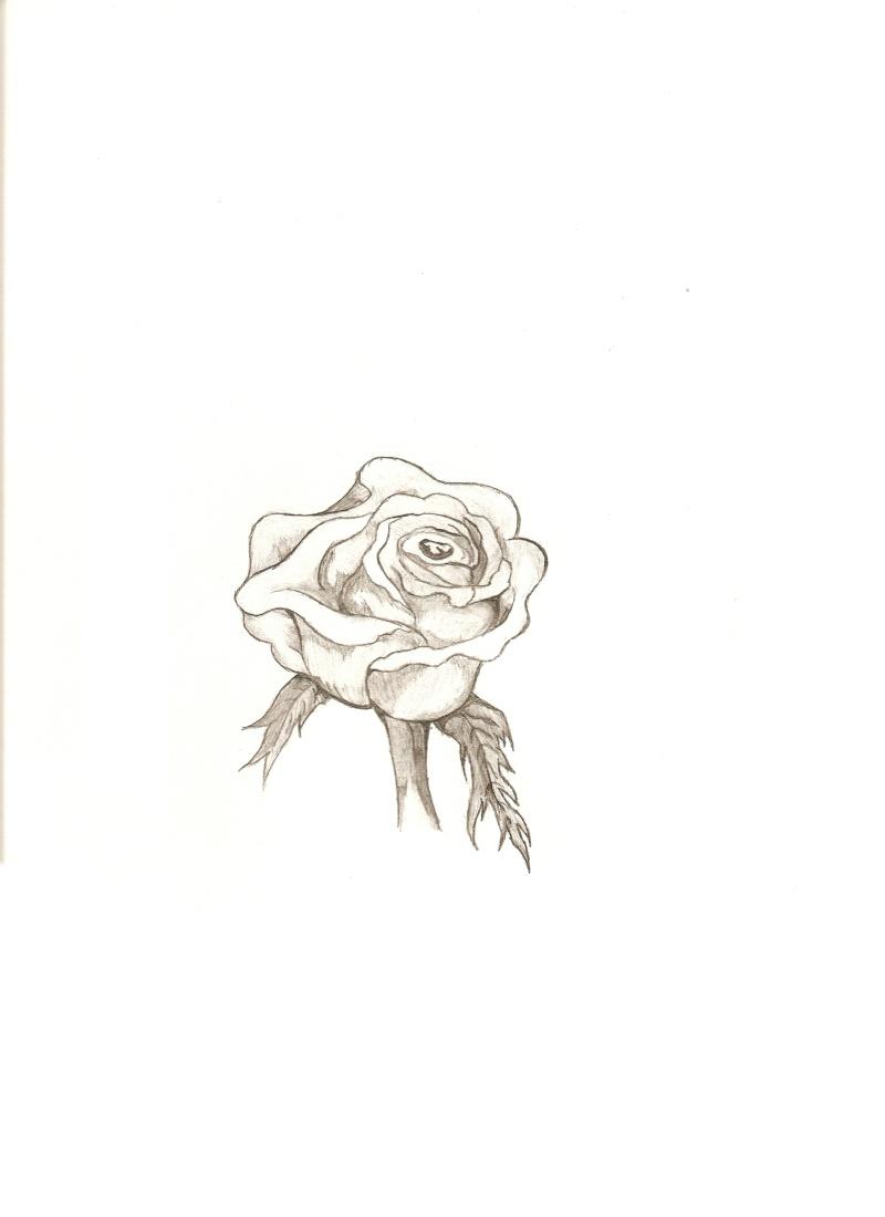 Rose Drawing Rose10