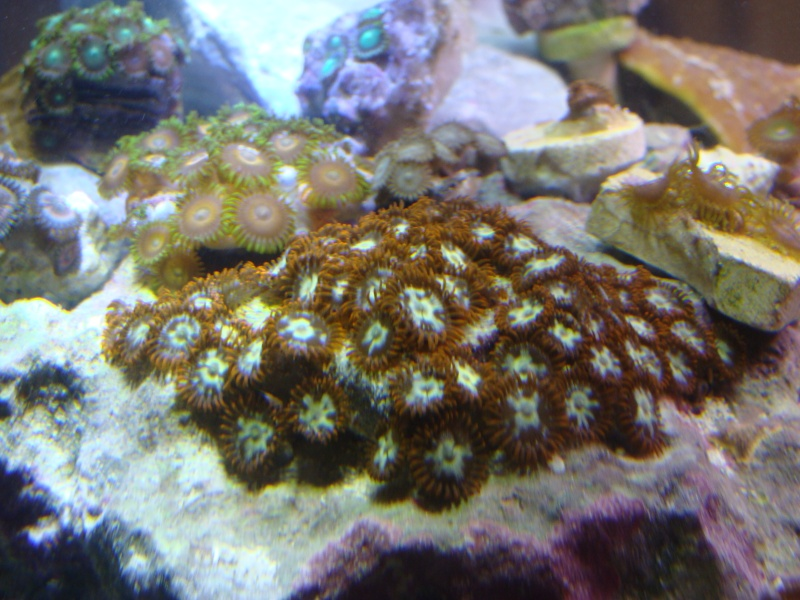 FS: Zoas (inc. space monsters), favia, and leather Dsc06411
