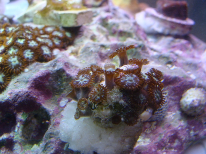 FS: Zoas (inc. space monsters), favia, and leather Dsc06414