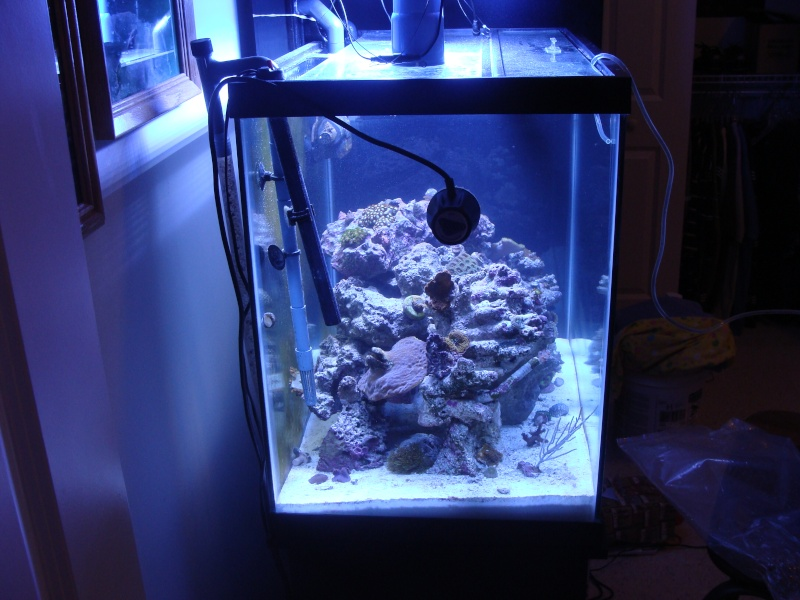 Nicks 56 Gallon Saltwater tank - Page 3 Dsc06710
