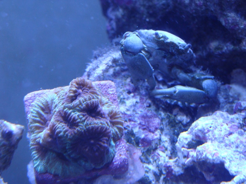 Nicks 56 Gallon Saltwater tank - Page 3 Dsc06714