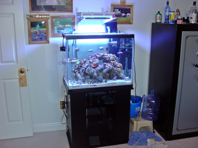 Nicks 56 Gallon Saltwater tank - Page 3 Dsc06819