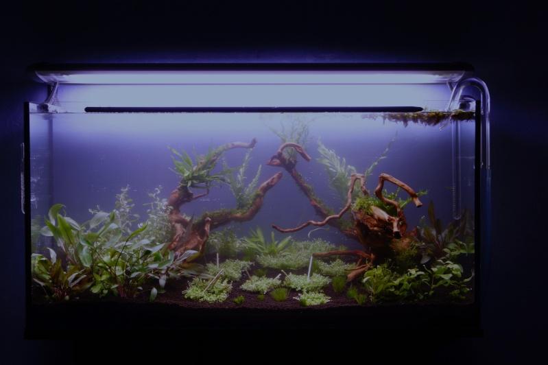 Mon premier aquarium 200 L  _dsc1525