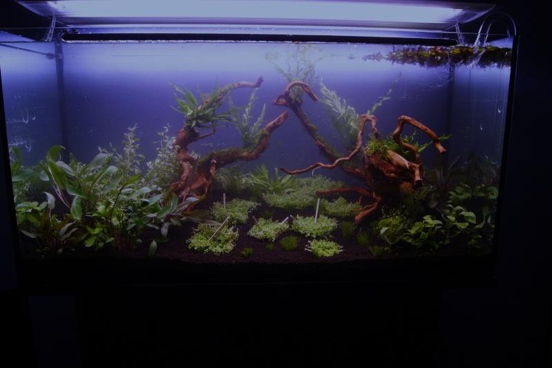 Mon premier aquarium 200 L  _dsc1526