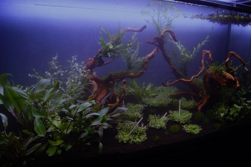 Mon premier aquarium 200 L  _dsc1527