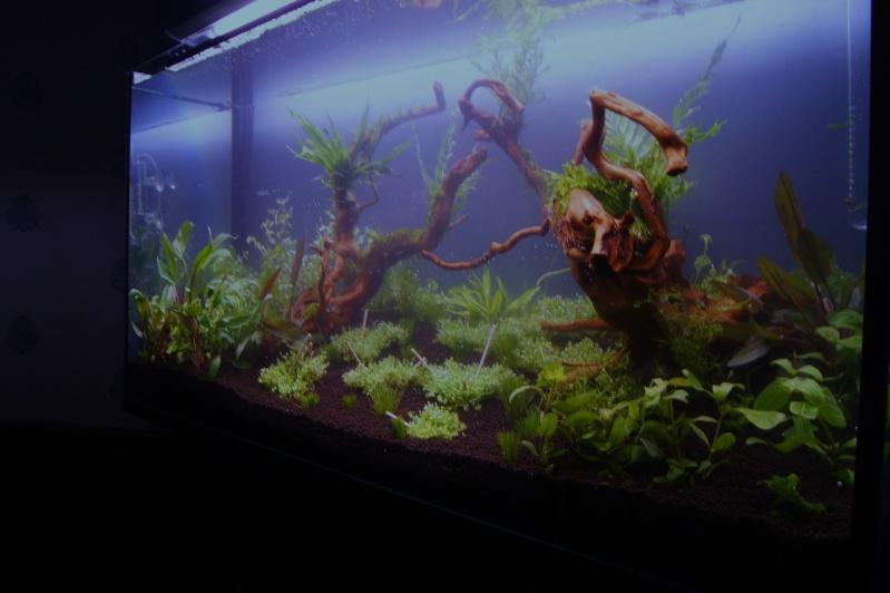 Mon premier aquarium 200 L  _dsc1528