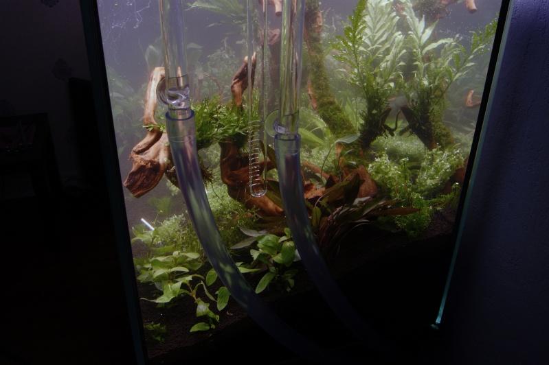 Mon premier aquarium 200 L  _dsc1610