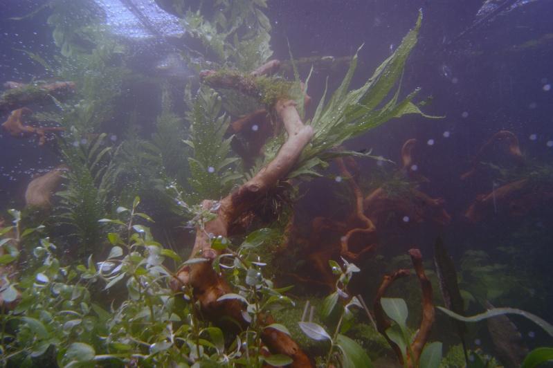 Mon premier aquarium 200 L  _dsc1612