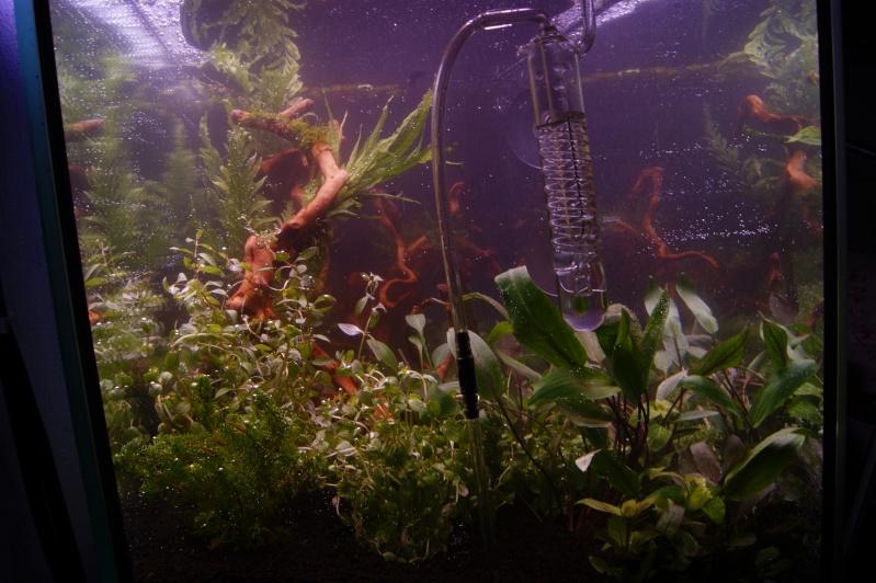 Mon premier aquarium 200 L  _dsc1613