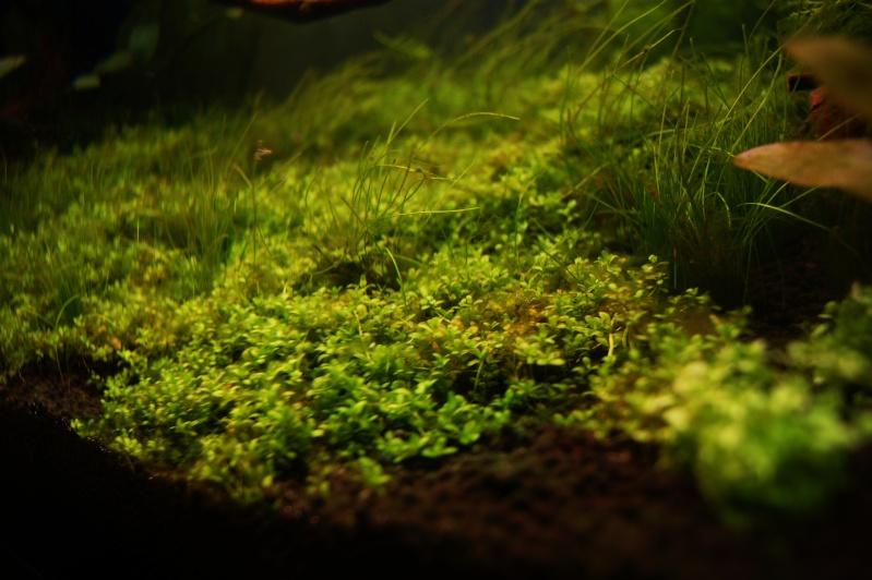 Algues .... _dsc1714