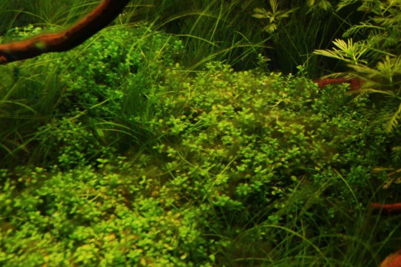 Algues .... _dsc1718
