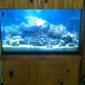 new saltwater set up 10-79810