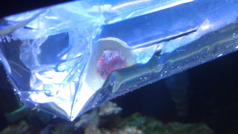 new coral frag Imag0510