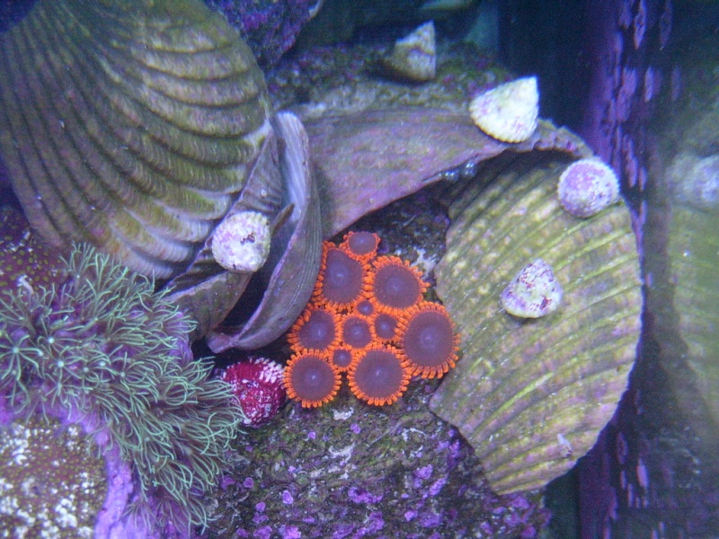 Coral Porn Swc13111