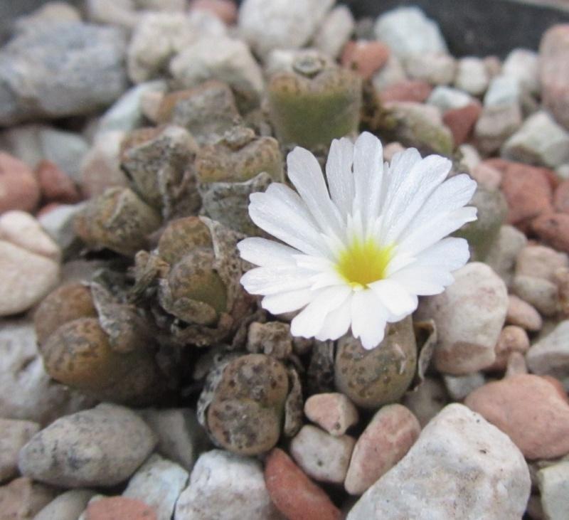 Michas Blüten 2011 - Seite 12 Img_2621