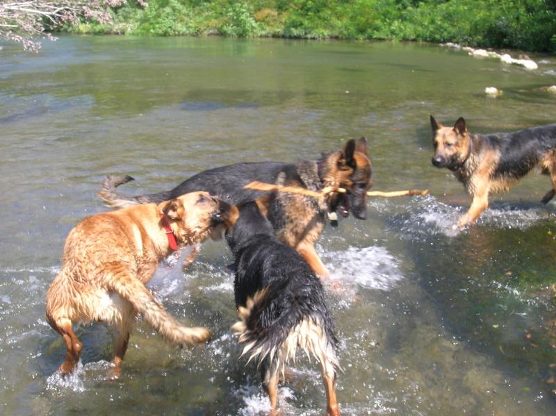 La vie des chiens au sein de l'association, c'est aussi ça... Baigna10
