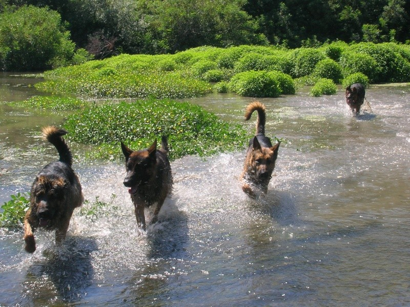 La vie des chiens au sein de l'association, c'est aussi ça... Baigna11