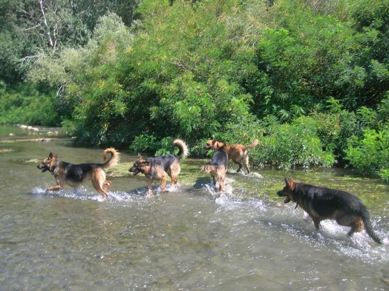 La vie des chiens au sein de l'association, c'est aussi ça... Baigna15