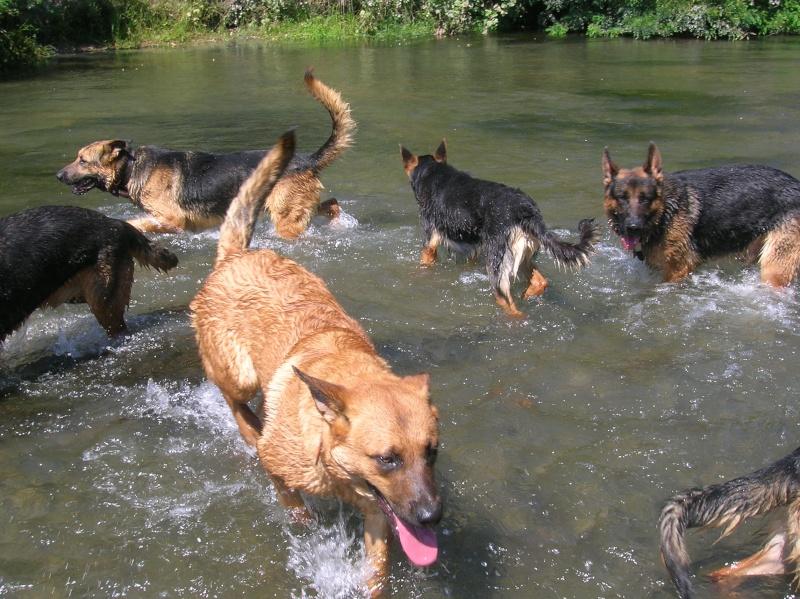 La vie des chiens au sein de l'association, c'est aussi ça... Baigna22