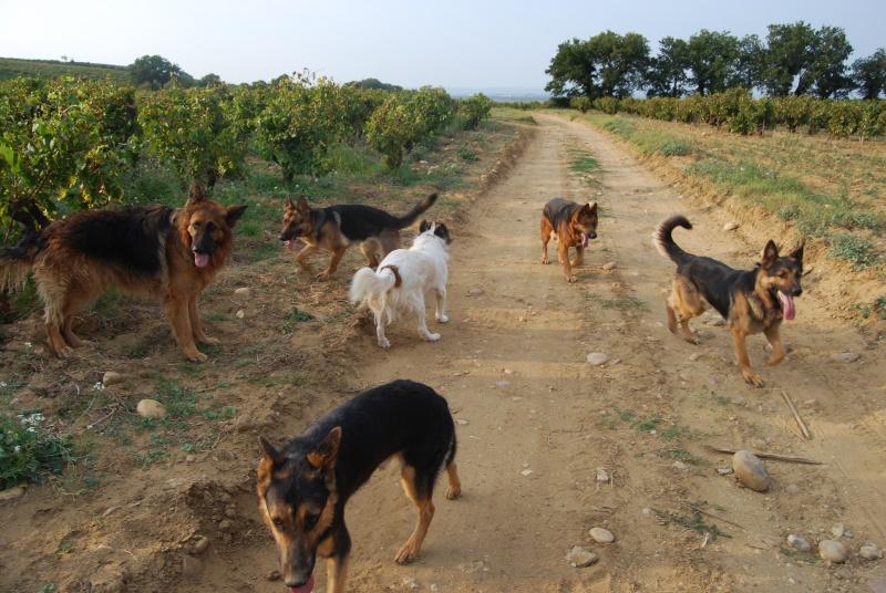La vie des chiens au sein de l'association, c'est aussi ça... Ballad23