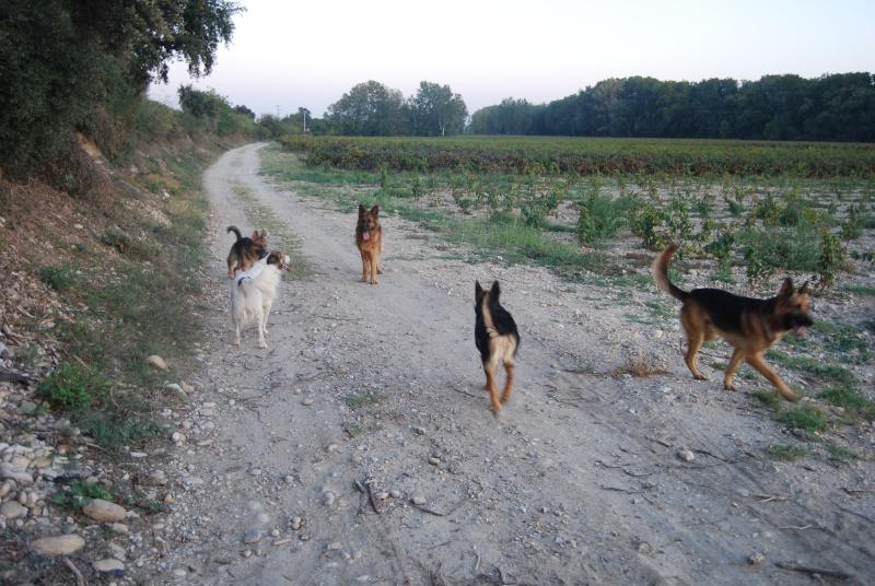 La vie des chiens au sein de l'association, c'est aussi ça... Ballad26