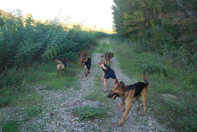 La vie des chiens au sein de l'association, c'est aussi ça... Ballad27