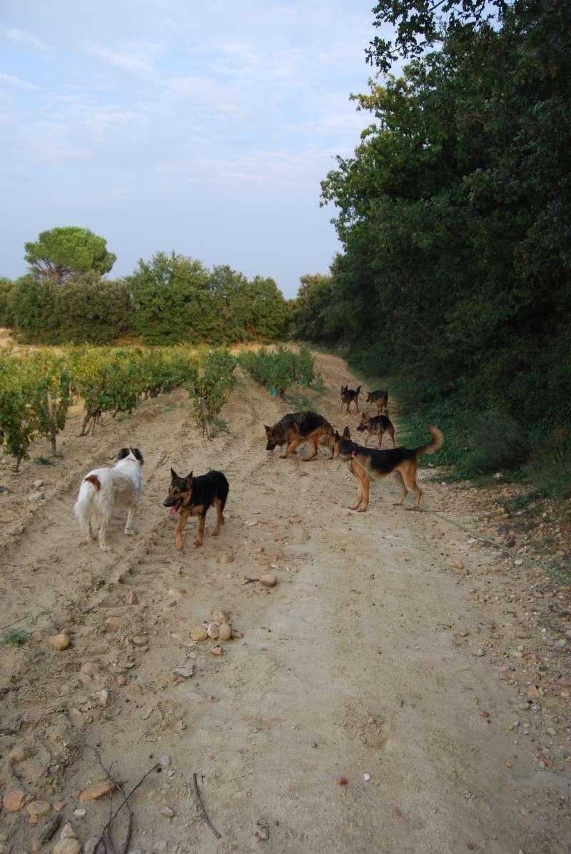 La vie des chiens au sein de l'association, c'est aussi ça... Ballad28