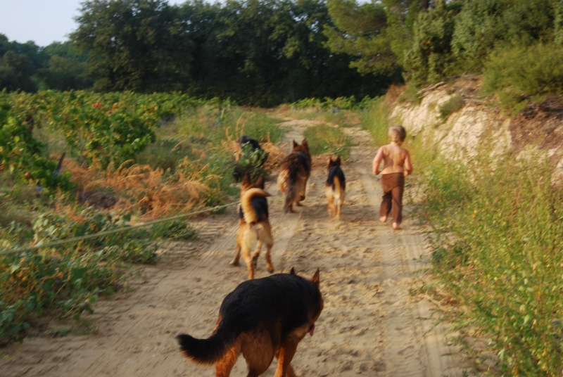 La vie des chiens au sein de l'association, c'est aussi ça... Ballad29
