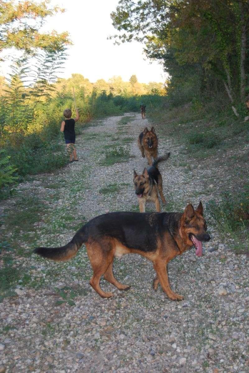 La vie des chiens au sein de l'association, c'est aussi ça... Ballad30