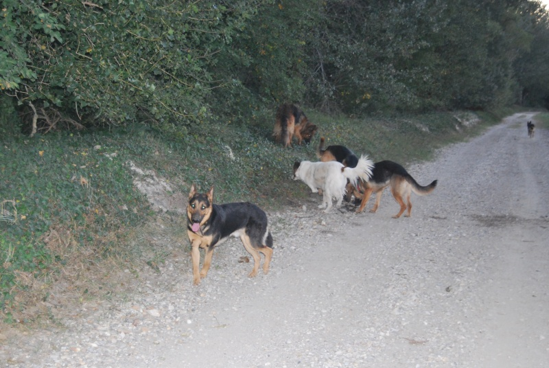 La vie des chiens au sein de l'association, c'est aussi ça... Ballad31