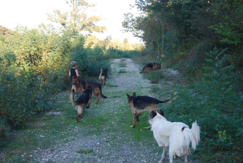 La vie des chiens au sein de l'association, c'est aussi ça... Ballad33