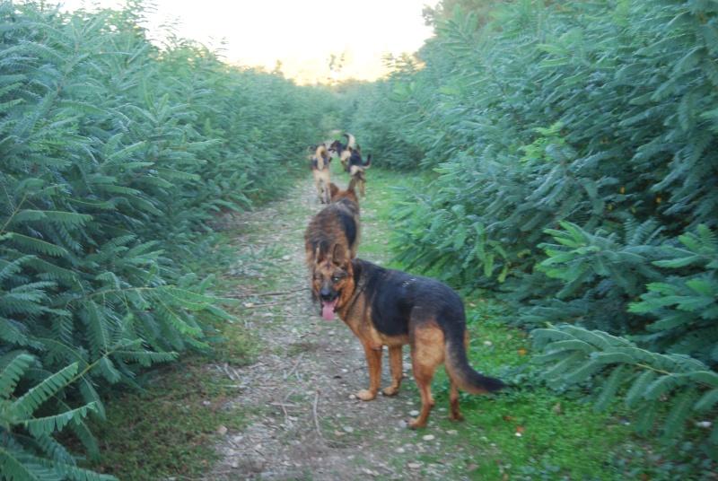 La vie des chiens au sein de l'association, c'est aussi ça... Ballad34