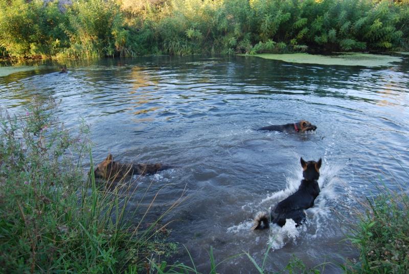 La vie des chiens au sein de l'association, c'est aussi ça... Ballad35