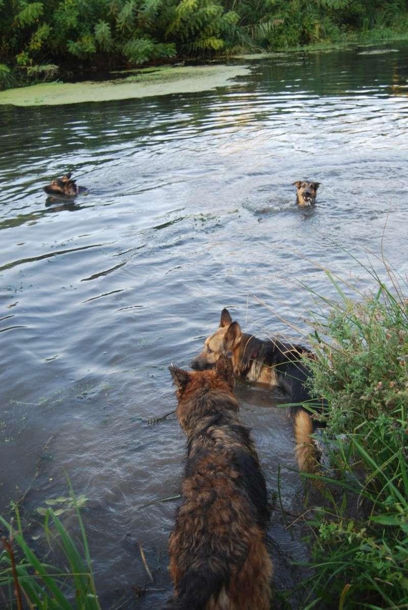 La vie des chiens au sein de l'association, c'est aussi ça... Ballad36