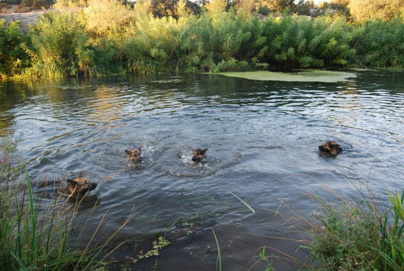 La vie des chiens au sein de l'association, c'est aussi ça... Ballad37
