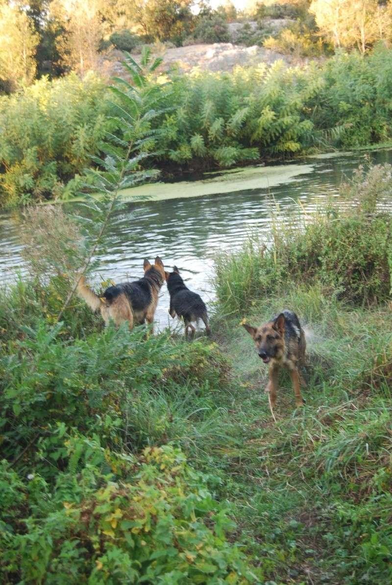 La vie des chiens au sein de l'association, c'est aussi ça... Ballad39