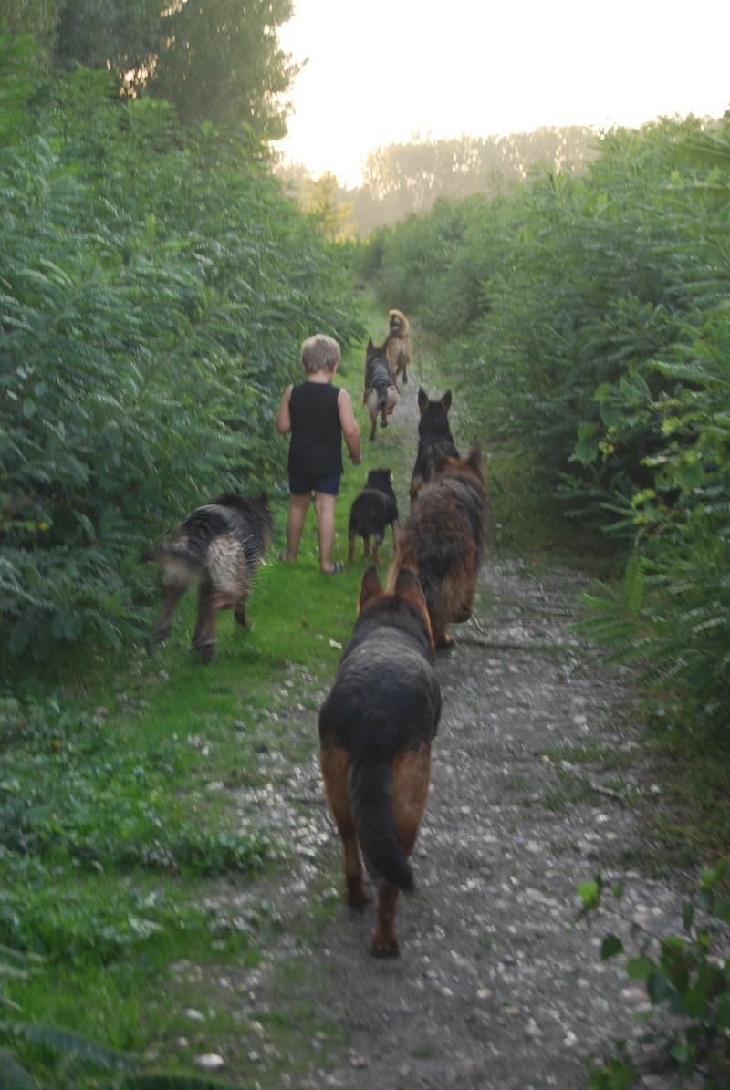 La vie des chiens au sein de l'association, c'est aussi ça... Ballad41