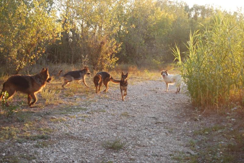 La vie des chiens au sein de l'association, c'est aussi ça... Ballad42