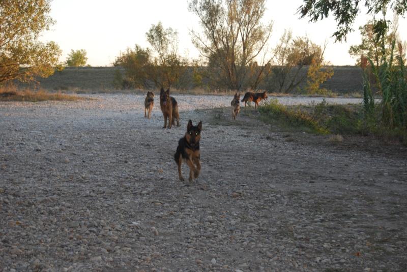 La vie des chiens au sein de l'association, c'est aussi ça... Ballad43